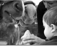 Niños a caballo