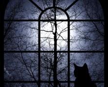 Sangre en la oscuridad