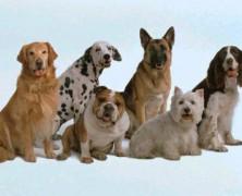 El aljibe de los perros
