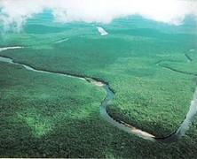 El enigma de un goteo selva adentro
